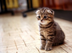It-s-kitten-season--Is-your-home-ready-for-the-arrival-of-your-new-pet-_16001188_800827146_0_0_14067751_500